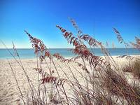 Surroundings - Sea Oats