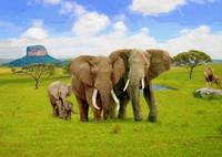 Elephant Animals of Africa