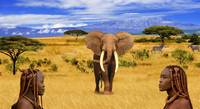 Elephant Animals of Africa 1