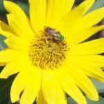 """""""FlowerBug"""" by ANG3553"""