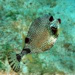 """""""spotted fish"""" by glider140"""