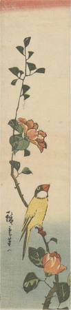 Hiroshige~Canary and Rose