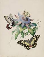 Helena Scott~Butterflies with passionfruit flower