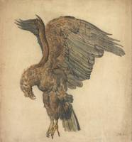 James Ward~Study of a Plunging Eagle
