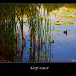"""""""DEEP WATER"""" by danroka"""