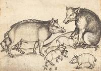 Martin Schongauer~Family of Pigs