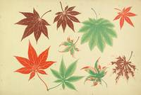 The Yokohama Nursery Co. Ltd.~Maples of Japan