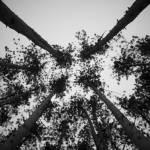 """Towers of Nature"" by JoshHelfferich"