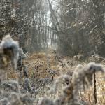 """Brisk Morning Trail"" by JoshHelfferich"