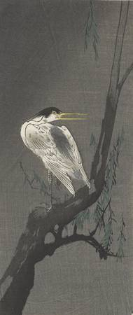 Ohara Koson~Heron perched on a willow tree