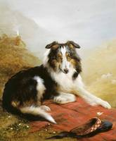 Edwin Douglas~A Collie, The Guardian of The Flock