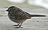 Sparrow hdr