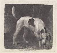 George Stubbs~Dog [A Foxhound on the Scent]