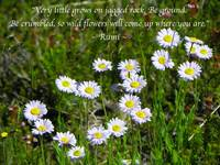 Rumi Quotes Art Print, Be ground. Be crumbled