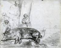 Rembrandt van Rijn~The Hog