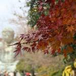 """""""Great Buddha with fall colors"""" by ryanchirnomas"""