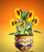 SUNFLOWER & POT