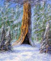 snowy sequoia solitude