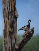 Wood Duck Perched