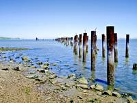 The Old Pier At Point Pinole