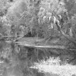 """myakka creek"" by Darvins"