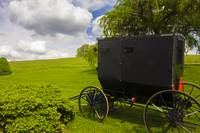 Amish Buggy at Hillside Farm