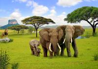 Elephant Animals of Africa 3