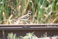 Roadrunner walking the Tracks 2020 i