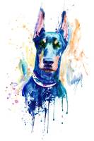 Doberman Dog Head