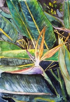 bird_of_paradise_flower