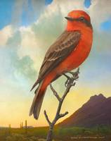 sunset vermillion flycatcher