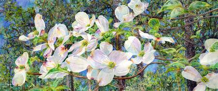 View Beyond Dogwood-flowering dogwood