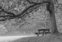 Picnic Bench under Tree in Mist