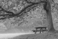 Picnic Bench under Tree in Mist (OP)