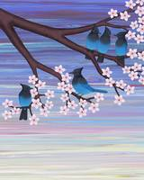 Steller's jays and cherry blossoms