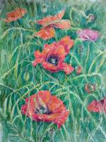 Poppies in a grass