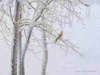 kestrel in winter