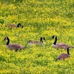 """""""Springtime Gathering"""" by suddath"""