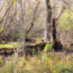 """Swampland"" by cphilruns"