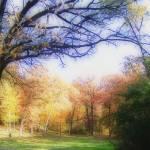 """bowen park"" by cphilruns"