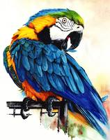 Jinx Blue and Gold Macaw parrot portrait