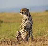 Kenya Wildlife pictures