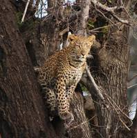 Botswana Wildlife pictures