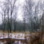 """Marshland"" by cphilruns"