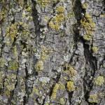 """""""TreeHugger 4"""" by cyndisstuff"""