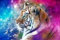 Tiger Mystery in Colors