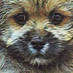 """PuppyFace"" by DeShark"
