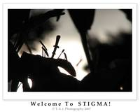 Wecome to stigma/carpel