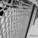 """SnowyFence"" by AbbyChase"