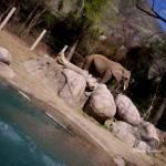 """""""elephantsigned"""" by AbbyChase"""